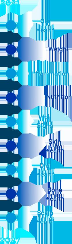 Clinicai Next steps timeline vertical